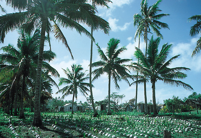 coconut production Caribbean coconut industry stakeholders developing  he said while more than 70 per cent of world coconut production  he said coconut water is a real.