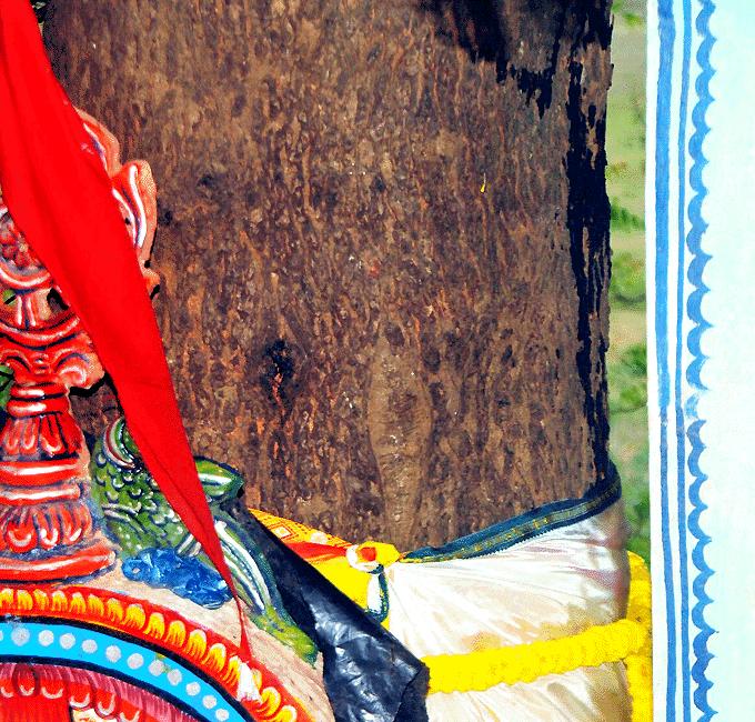 Nabakalebara image search